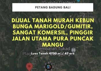 Dijual Tanah Murah Pelaga, Petang Badung Bali #1