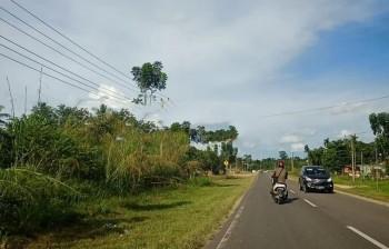 Tanah Murah 0 Jln Raya Lintas Tebo Jambi, Tebo Tengah, Tebo #1