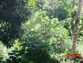 Tanah Luas Lokasi Bagus Murah Siap Bangun Di Nupabomba Donggala, Sulawesi Tengah, Tawaeli, Donggala #1