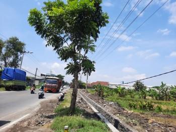Murah Tanah 0 Raya Kedamean Gresik Lokasi Industri Dekat Tol Legundi Krian Hanya 1.5jt/m2 Nego #1