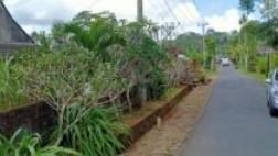 Tanah Ekslusive Buc View Perkebunan Di Kintamani Bangli Dekat Ubud #1