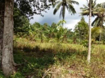 Tanah Dijual Manado Minahasa Utara #1