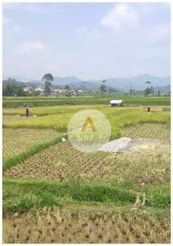 Jual Cepat Tanah Sawah Di Ciwidey Bandung #1