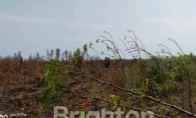 Tanah Dijual Jalan Raya Pelangkaraya Palangkaraya #1