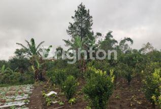 Tanah Dijual Banjar Paket Bangli #1