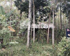 Tanah Dijual Br Pendek Desa Manistutu Jembrana #1