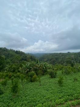 Tanah View Pegunungan Di Desa Mengani Kintamani Bangli #1