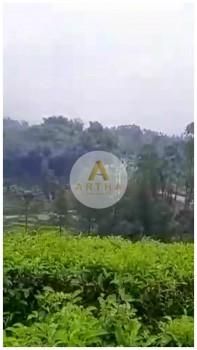 Dijual Cepat Tanah Kebun Teh Lokasi Strategis Di Gambung Ciwidey #1