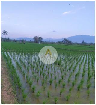 Jual Tanah Sawah Desa Gajah Mekar Kutawaringin Soreang #1