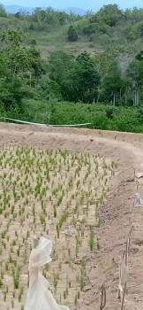 Tanah Dengan Luas 40ha (hektarare) Yang Berlokasi Di Desa Bulucenrana, Kec. Pituriawa, Kab. Sidenreng Rappang, Prov. Sulawesi Selatan. #1