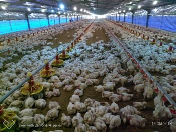 Kandang Ayam Lengkap Dan Modern (tanpa Isi). #1
