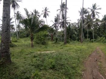 Forsale Lahan Tanah Luas Banyuwangi #1