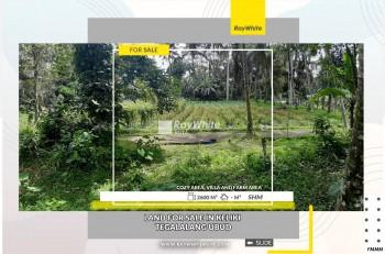 Land For Sale In Keliki Tegalalang Ubud #1