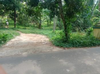 Tanah Kebun Durian & Petai Panen Setiap Musim #1