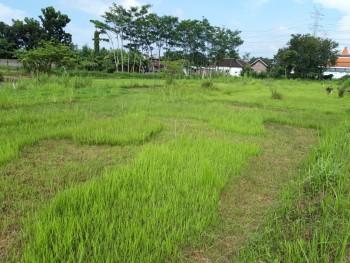 Jual Cepat Tanah Di Grati Pasuruan Cocok Untuk Pergudangan Dan Industri #1
